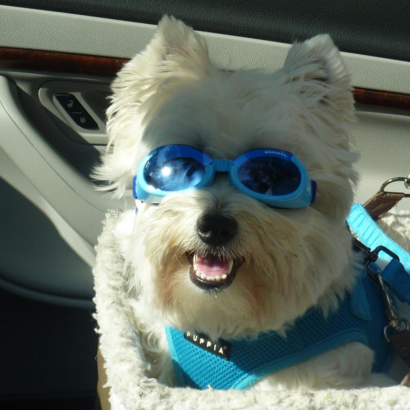 Hidden Dog Fence Customer Photo Gallery